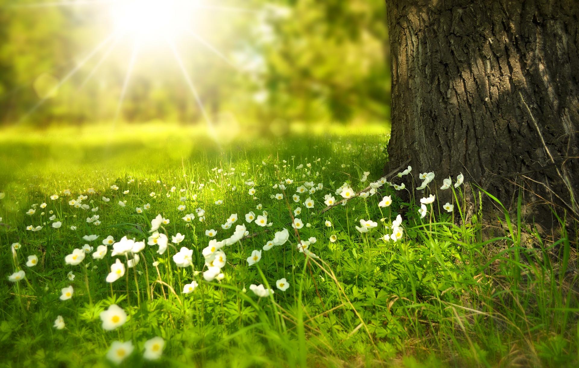 芝生の代わりに!グランドカバーにおすすめの植物5選