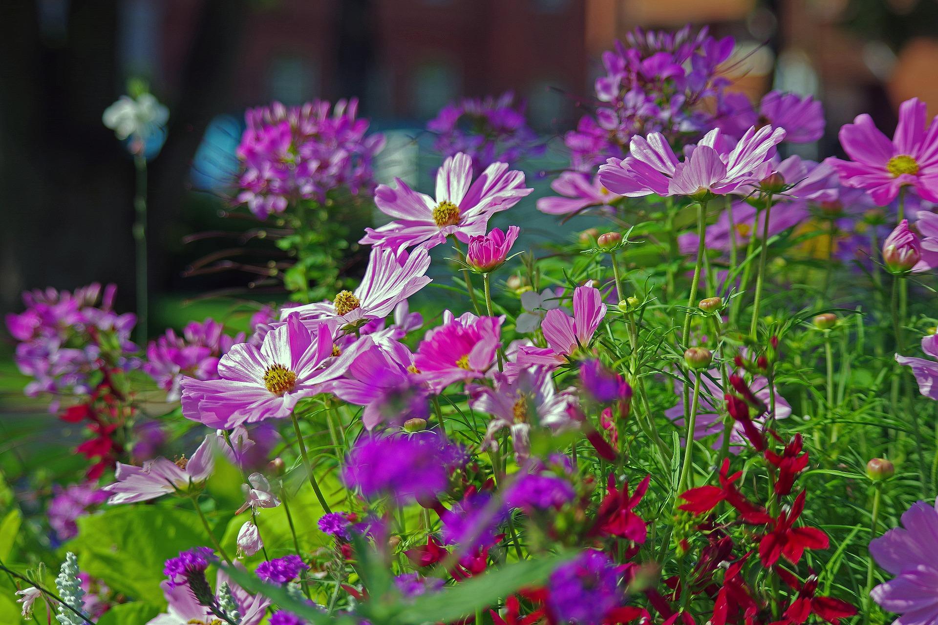 9月がまき時の花5選!直播きで簡単に育つ花の種をまこう