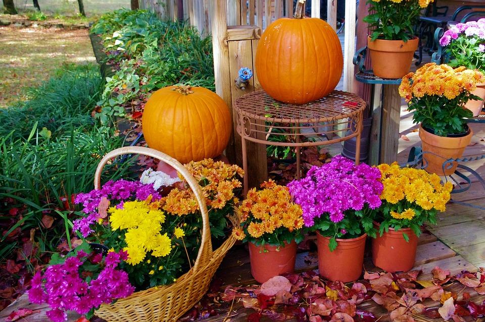 ハロウィンにもぴったり!秋に植えるおすすめの花【5選】