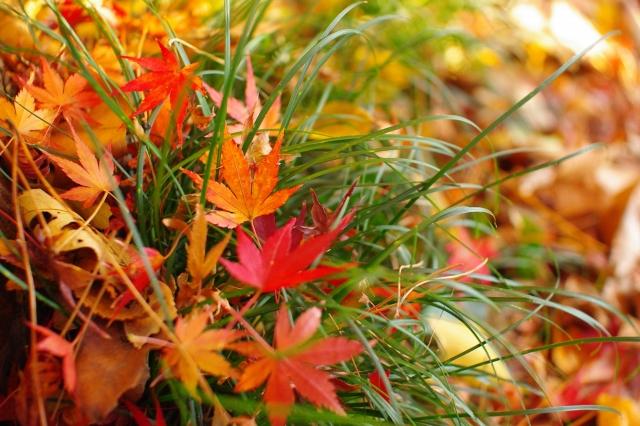 秋の寄せ植えづくりに必見!使える植物・リーフ【5選】