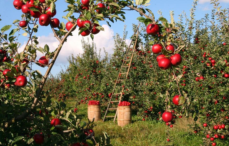 収穫を楽しもう!ガーデニングに最適な実のなる木5選
