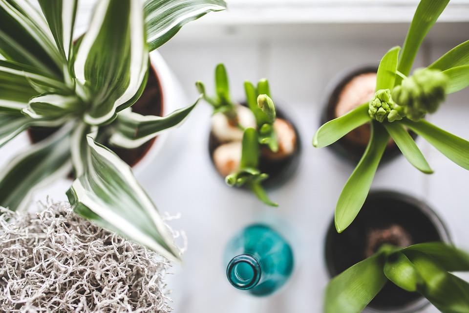 リビングにおしゃれなグリーンを飾ろう!おすすめ観葉植物【5選】