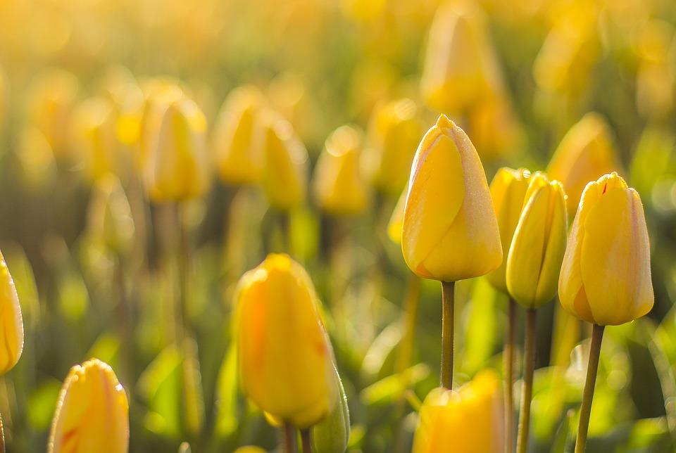 春が待ち遠しくなる花々!人気の秋植え球根【6選】