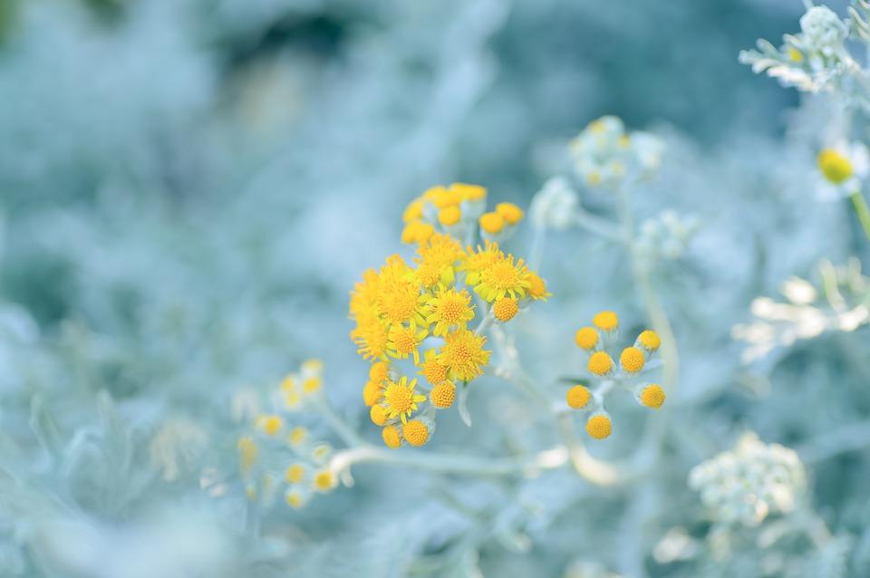 冬のガーデンに輝きを放つシルバーリーフ【5選】