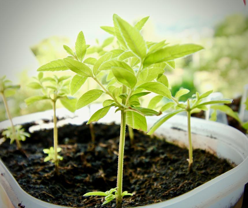 挿し木がもたらす3つのメリットって!?挿し木で植物を増やしてみよう!