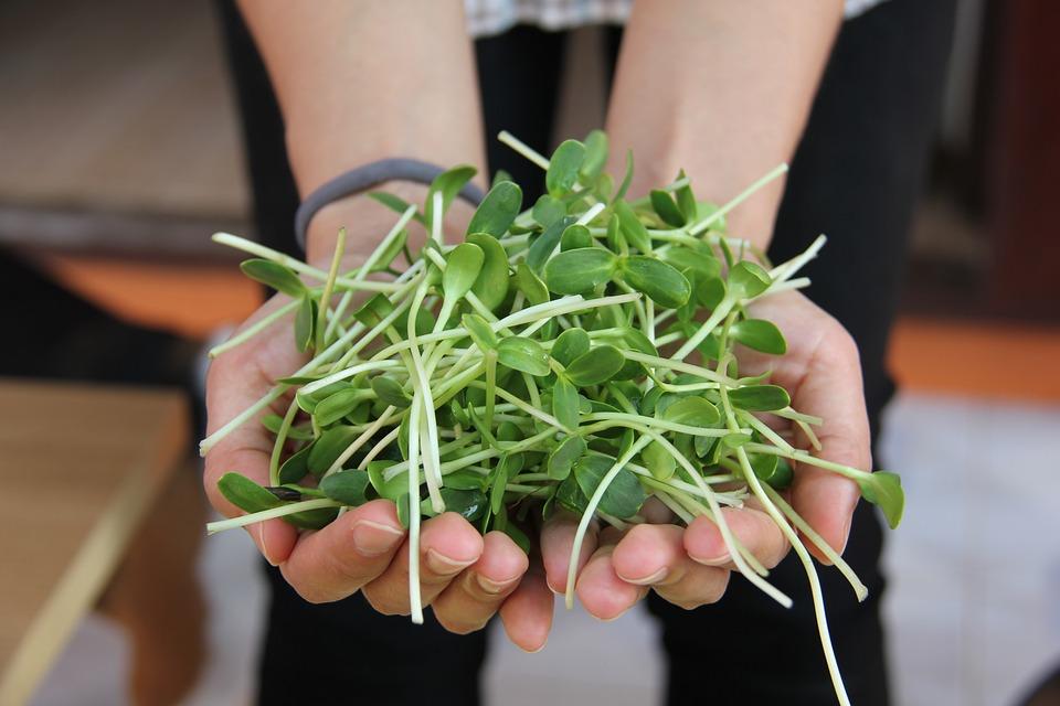 新芽を育てよう!キッチンガーデン「スプラウト栽培」の手順5つをご紹介
