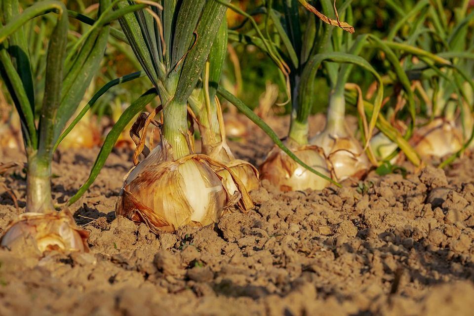庭植えを楽しむなら土が基本!土作りの基本ポイント5つをご紹介