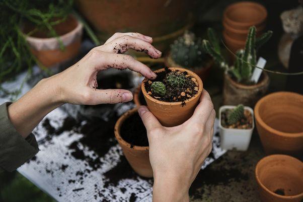 植える前に知っておきたい!5つの鉢メリット・デメリット!