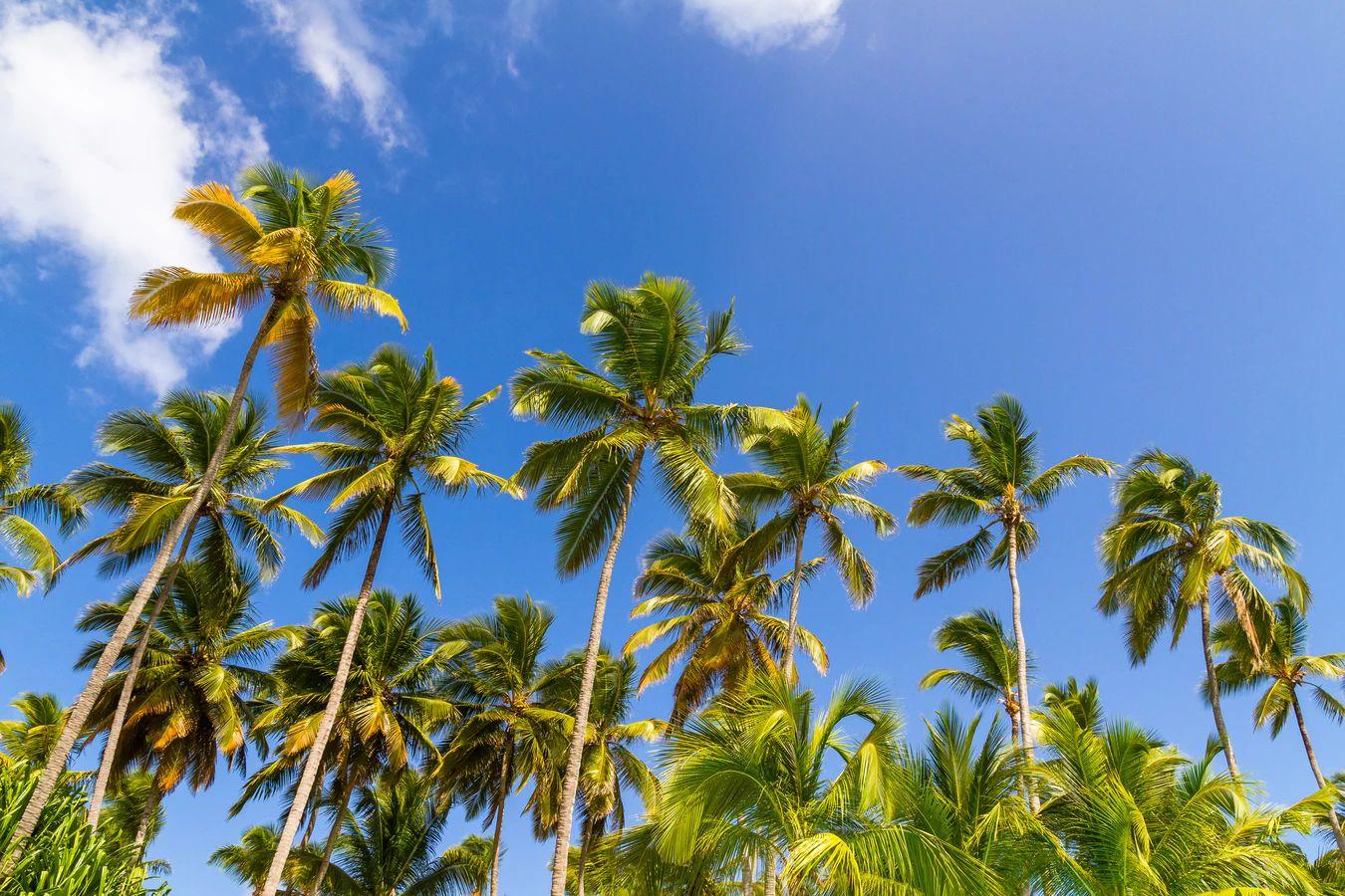 リゾートガーデンを作るなら?おすすめ樹木5選をご紹介