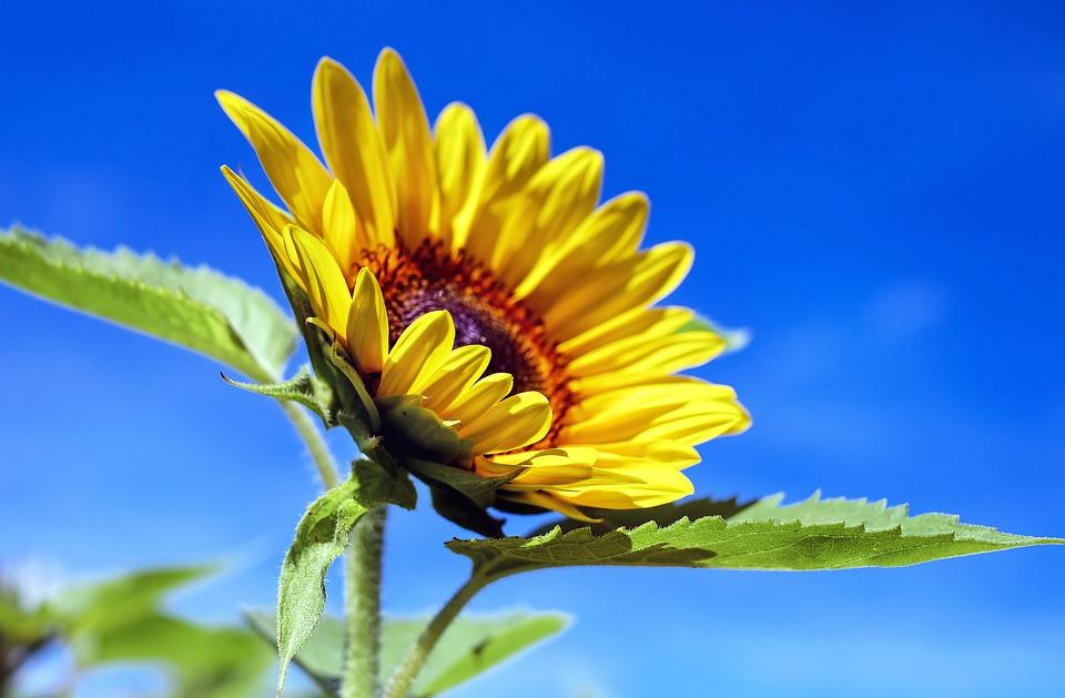暑さに強い夏の花を育てよう!夏の代表的な花【6選】