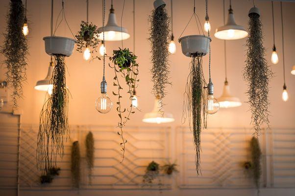 ユニークで個性的!リビングに飾りたい観葉植物【6選】