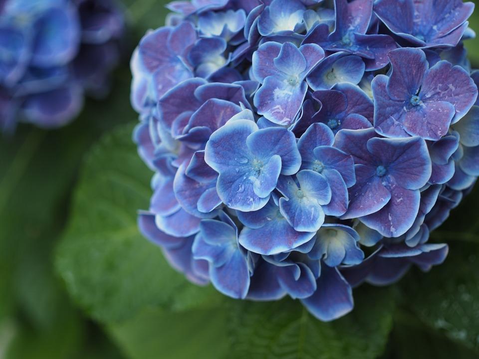 梅雨の時期にやるべき庭仕事!湿気・蒸れの5つの対策