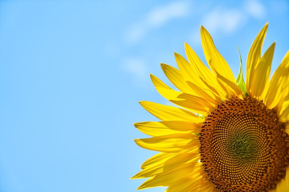 夏の暑さで草花に元気がない?やってみよう!5つの夏越し対策