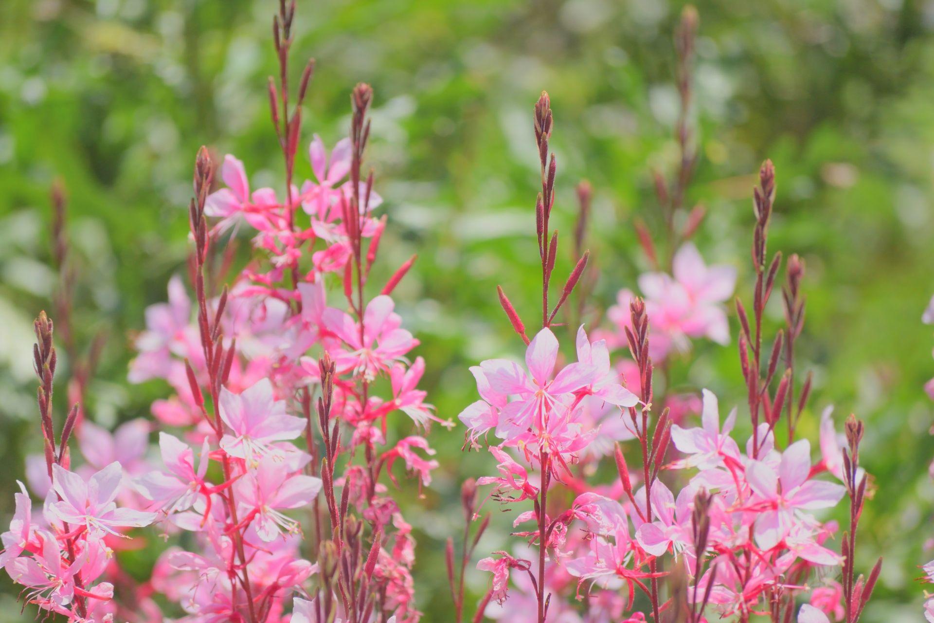 晩秋まで咲く!開花期の長い花6選!簡単に育てられる花を植えよう