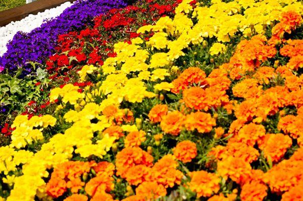 夏の一年草を種まきから育てよう!4月頃から種まきできる花【12選】