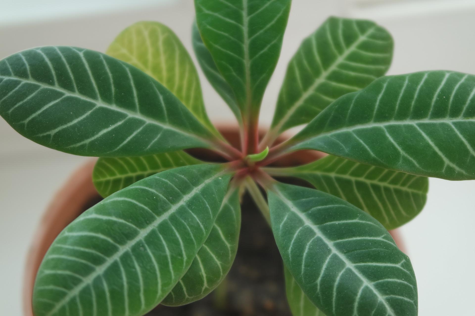狭い場所でも育てられる!成長遅めの観葉植物5選をご紹介