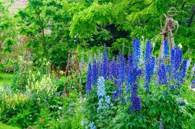 イングリッシュガーデンにおすすめの庭木10選