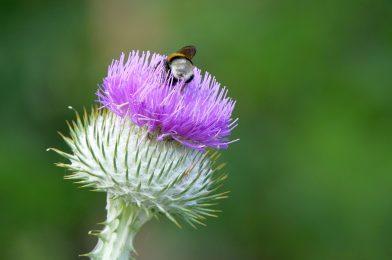 取り扱い注意! トゲのある雑草5選とその対処法