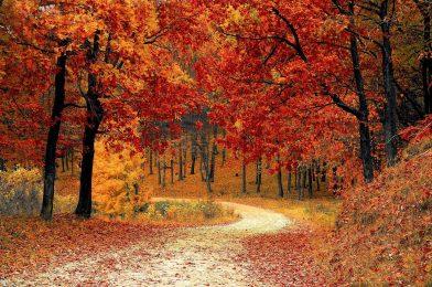秋到来で紅葉を楽しもう! 庭木に取り入られる紅葉樹木6選