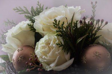 クリスマスの寄せ植えや冬の花壇におすすめの草花10選