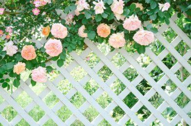 ガーデンフェンスで庭をおしゃれに!人気の種類やおすすめレイアウト5つを紹介