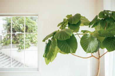 冬も元気なおすすめの観葉植物8選!寒い時期の管理方法も解説