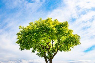 常緑樹と落葉樹別におすすめの庭木10選を紹介