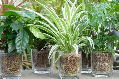 ハイドロカルチャー栽培をはじめよう! 使い方や注意点など6つのコツ