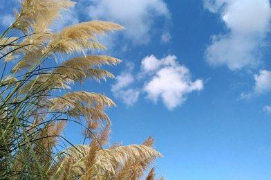 ドライガーデンがおしゃれ!おすすめの植物10選を紹介