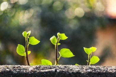 アイビーを育てよう! 植え付けから増やし方までの6つのポイント